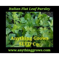 Herb - Parsley - Flat Leaf Italian - Organic