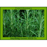 Herb - Rosemary ~ French