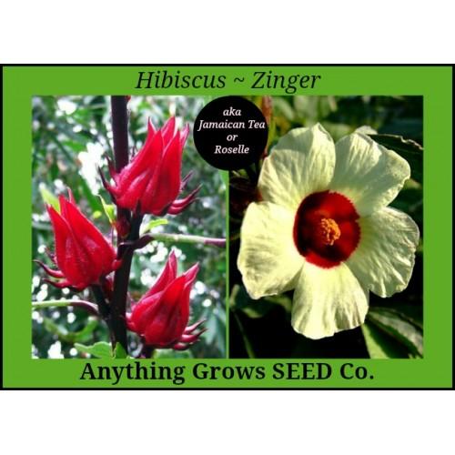 Hibiscus Zinger Hibiscus Sabdariffa