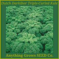 Kale - Triple~Curled Dutch Darkibor
