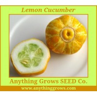 Cucumber - Lemon Cucumber - Organic