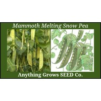 Pea - Mammoth Melting Snow - Organic