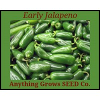 Pepper - HOT - Jalapeno Early - Organic