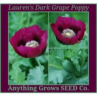 Poppy~Lauren's Dark Grape, Papaver somniferum