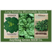Spinach - Bloomsdale Long Standing - Organic
