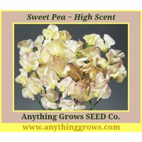Sweet Pea - High Scent