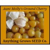 Ground Cherry - Aunt Molly's