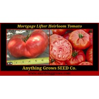 Tomato - Mortgage Lifter,  Beefsteak