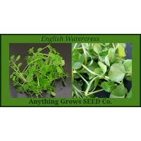Watercress - English - nasturtium officinalis